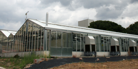 Green Labs: Internet de las Cosas aplicada a la gestión y monitorización de invernaderos