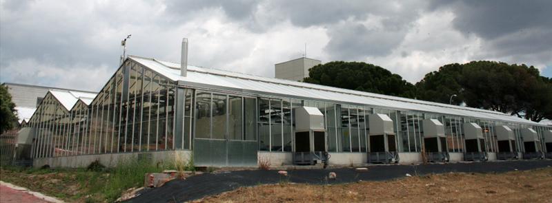 Figura 1. Invernaderos del Centro de Biotecnología y genómica de Plantas.