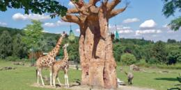 Vídeo IP para la seguridad y análisis del comportamiento de los animales en un zoológico de Alemania