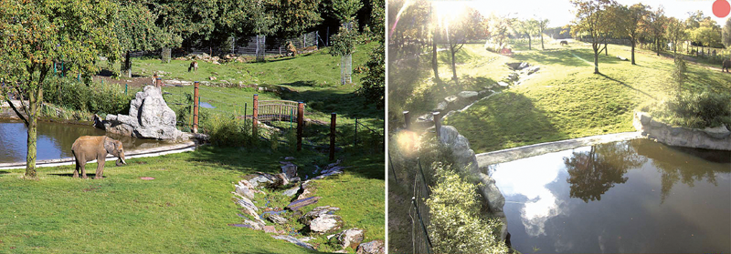 Cámaras panorámicas en Opel Zoo