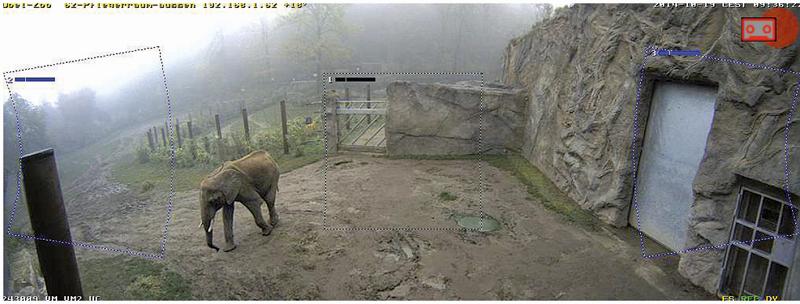 Videovigilancia de Elefantes en el Opel Zoo