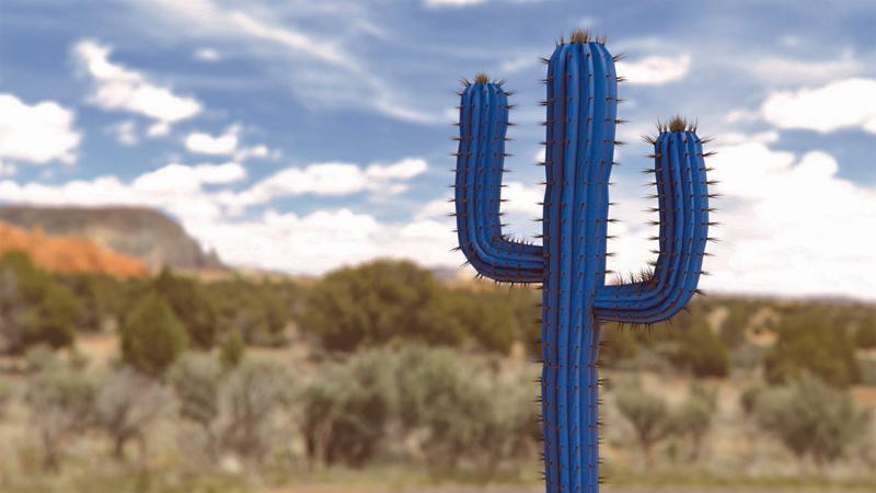 Concepto Cactus